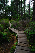 Moss Green Posters - The Path To Cape Flattery Poster by Jeff  Swan