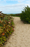 Path To The Beach Photo Prints - The Path to Peace Print by Michelle Wiarda