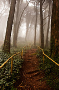 Nature Photos - The pathway by Jorge Maia