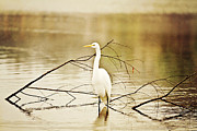 Louisiana Heron Prints - The Patient Fisherman Print by Scott Pellegrin