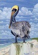 Bimini Posters - The Pelican Perch Poster by Danielle  Perry