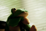 Denise Beverly - The Pensive Frog
