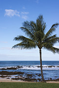Perfect Palm Tree Sharks Cove At Sunset Beach Oahu Hawaii Seascape Posters - The Perfect Palm Tree - Sunset Beach Oahu Hawaii Poster by Brian Harig