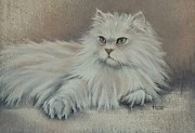 Persian Cat Pastels Posters - The Persian Prince Poster by Cynthia House