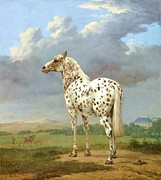 Pie Paintings - The Pie Bald Horse by Pg Reproductions