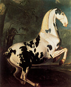 Pinto Horse Paintings - The Piebald Stallion at the Eisgruber Stud by Johann George von Hamilton