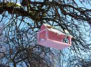 Conservation Art Poster Posters - The Pink Bird Feeder Poster by Ausra Paulauskaite