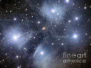 Open Clusters Posters - The Pleiades, An Open Cluster Of Stars Poster by Reinhold Wittich