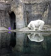 Gwyn Newcombe - The Polar Bear and The Purple Chair