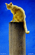 The Pole Cat... Print by Will Bullas
