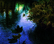 Jo Ann - The pond at dusk