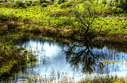 Outside Pictures Prints - The Pond Print by Marco Oliveira