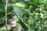 Katydid Art - The Pondering Soul by Neal  Eslinger