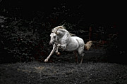 Forelock Photos - The Power Of The Stallion D0104 by Wes and Dotty Weber