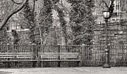 Park Benches Framed Prints - The Promenade BW Framed Print by JC Findley