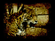Mayan Jaguar Prints - The Protector Print by Val Brackenridge