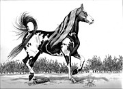 Horse Drawings Prints - The Proud Pinto Saddlebred Stallion Print by Cheryl Poland