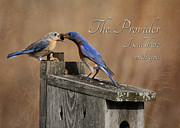 Feeding Birds Digital Art Framed Prints - The Provider Framed Print by Lori Deiter