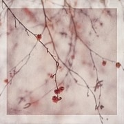 Botanical Digital Art Metal Prints - The Purr Of Autumn Metal Print by Priska Wettstein