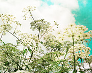 Queen Annes Lace Prints - The Queen of Lace Print by Kim Fearheiley