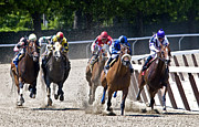 Race Horse Photos - The Race by Alida Thorpe