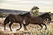 Wild Horses Framed Prints - The Race Framed Print by Douglas Barnard