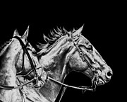 Black Stallions Prints - The racers Print by Camille Lopez