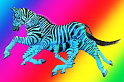 Zebras Posters - The Rainbow Zebras Poster by Betsy A Cutler East Coast Barrier Islands