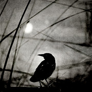 Sharon Coty - The Raven and the Orb