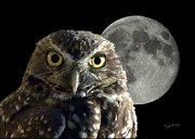 Dale Paul - The real night owl