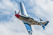 Steve Rowland - The Rebel- P51