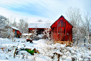 Snow Scenes Metal Prints - The Red and White Metal Print by Emily Stauring