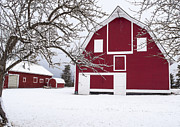 Daysray Prints - The Red Barn Print by Fran Riley