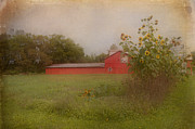 Kathy Rinker - The Red Barn