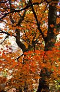 Saija  Lehtonen - The Red Tree