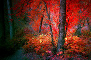 Tara Turner - The Red Tree