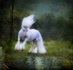 White Horse Prints - The Reflection Print by Fran J Scott