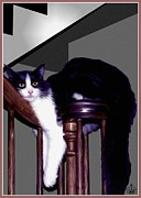Domestic Cats Digital Art - The Resting Place by Ronald Chambers