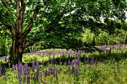 Brenda Giasson - The Resting Tree