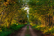 Pei Metal Prints - The Road Less Travelled Metal Print by Matt Dobson