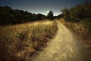 Bonnie Bruno - The Road Not Taken