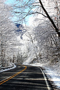 Danielle Smith Metal Prints - The road to Winter Metal Print by Danielle Smith