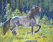 Melody Perez Metal Prints - The Roan Metal Print by Melody Perez