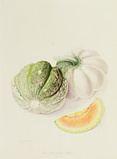 Kitchen Watercolor Paintings - The Romana Melon by William Hooker