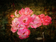 Swan Digital Art Posters - The Romance of Roses Poster by Lianne Schneider