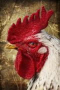 Animal Mixed Media Metal Prints - The rooster Metal Print by Angela Doelling AD DESIGN Photo and PhotoArt