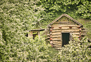 Log Cabins Photos - The Root Cellar by Heather Applegate