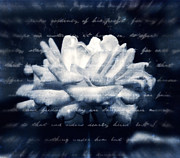 White Cloth Posters - The Rose Beneath The Love Letter Poster by Zeana Romanovna
