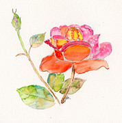 Flower Garden Drawings Prints - The rose Print by Eva Ason