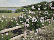 Cape Cod Paintings - The Rose Fence by OMalley Keyes
